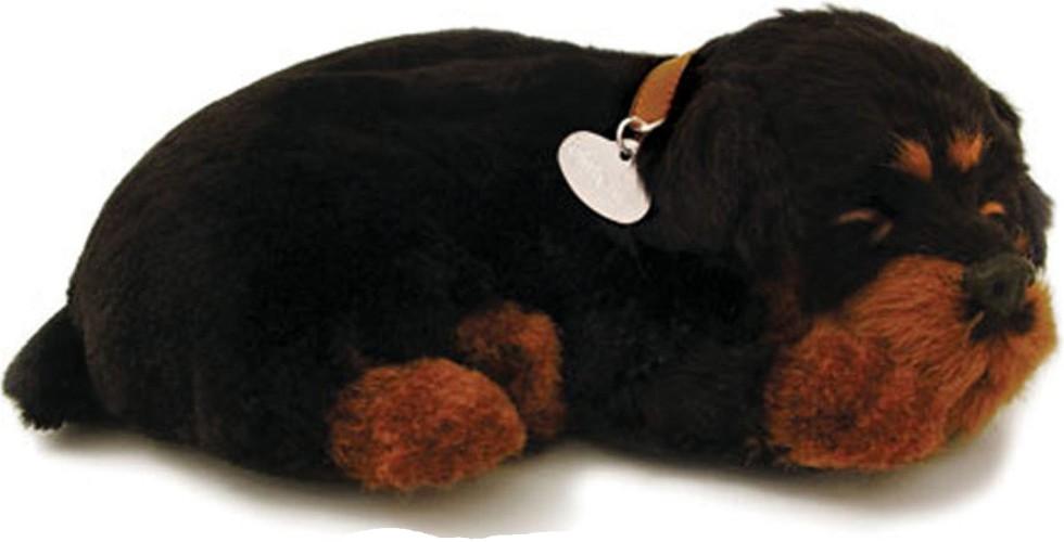 Perfect petzzz Rottweiler